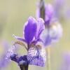 Naturfotografie im Frühling (Ennstal)